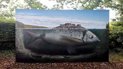 photo-festival-erik-johansson-fishy-island
