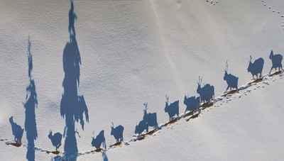 photo-festival-jonathan-nackstrand-reindeer-farming