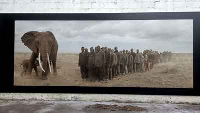 photo-festival-nick-brandt-elephants-africans