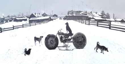 photo-festival-pentti-sammallahti-snow-landscape-dogs