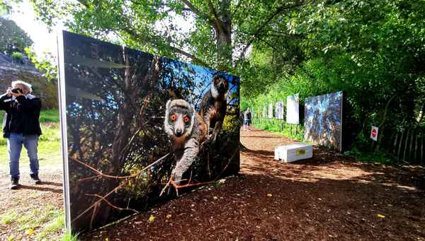 photo-festival-ulla-lohmann-madagascar-lemur